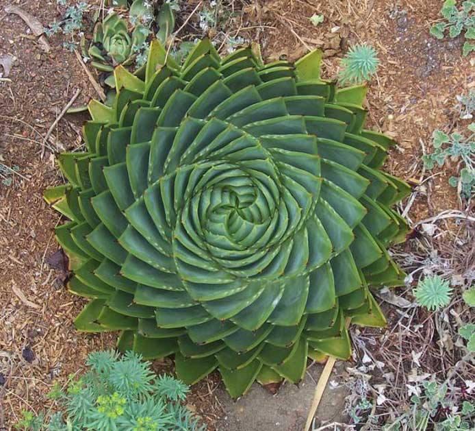 spirale à partir d'étoile à 5 branches